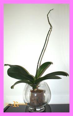 """J'ai testé """"l'hydroculture totale"""" sur mes orchidées. Glass Vase, Plus Rien, Plants, Inspiration, Bouquets, Home Decor, Gardens, Tips, Colombia"""
