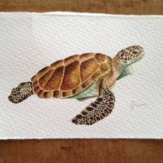 Meeresschildkröte Best Picture For Sealife Tattoos sleeve For Your Taste You are looking for somethi Sea Turtle Decor, Sea Turtle Art, Sea Turtles, Water Color Turtle, Baby Turtles, Watercolor Sea, Watercolor Animals, Watercolor Paintings, Sea Turtle Painting