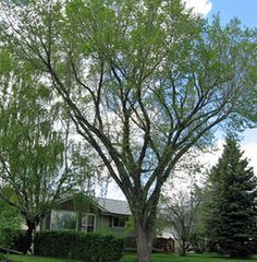 The impact on summer storms on city trees Watch News, Storms, Calgary, Trees, Gardening, City, Summer, Plants, Thunderstorms