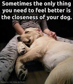 Sometimes the only thing you need to feel better is the closeness of your dog.