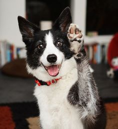 One woman and her dog: A photographer's adorable images of her beloved former search-and-rescue border collie go viral