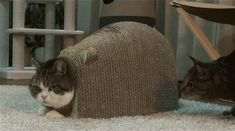 Image result for cat stuck gif