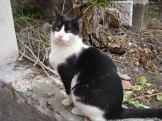 blog di Sara: gattitudine