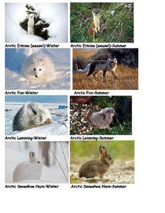 Camouflage Arctic Animals