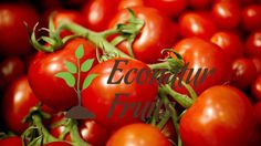 It should be known #most of all people that how #important fruits are for our #health and well-being. But, in our busy time, now we can get the better way. #Online delivery of #vegetables can save your precious time and #money as well. This is the #newest concept and quite beneficial for those people who are #busy with their #daily work #schedule. The source for you to visit is www.econaturfruits.com.