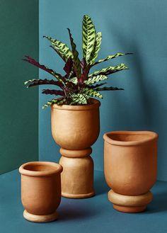 Tero Kuitunen planters