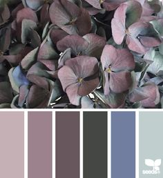 design seeds | flora tones | for all who ♥ color