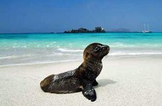 Expedition cruises in Galapagos Islands | Andean Trails