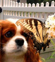 conversation with a butterfly