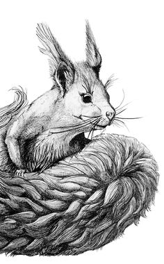 Das fleissige Eichhörnchen ist gerade flink von Baum zu Baum unterwegs und sammelt seine Früchte für den Winter. Bleistift Illustration für die Kinder-Kollektion von von ERIKA. #illustration #squirrel #art #zeichnung #organic #artist #berlin #kunst #pillow #nursingpillow all rights reserved by von ERIKA www.von-ERIKA.de