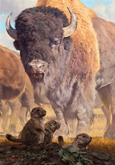 View Prairie Dog Days of Summer by Dustin van Wechel on artnet. Browse upcoming and past auction lots by Dustin van Wechel. Wildlife Paintings, Wildlife Art, Animal Paintings, Animal Drawings, Horse Drawings, Buffalo Animal, Buffalo Art, Majestic Animals, Animals Beautiful