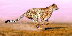 Google Image Result for http://www.onlineartdemos.co.uk/misc_images/on-easel/Cheetah/cheetah-oil-painting.jpg