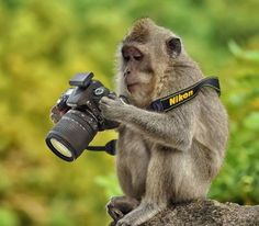 #animals behind the lens.
