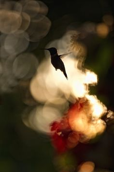 """""""If my love could be represented by a blur, it would be the beating of a hummingbird's wings. Did you know that my love is the only love that can fly backwards? """" --Jarod Kintz"""