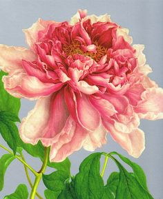 """Bauer's Tree Peony is a beautiful representation of one of Nature's most amazing flowers! We are partial to silk threads for the color and shading of this 13"""" x 16"""" mono deluxe needlepoint canvas, but will be happy to select and add appropriate wool or silk threads to help complete. Available as 14, 16 or 18 mesh. Please indicate your mesh preference in the Notes section at Checkout. Available in two larger sizes: 18"""" x 20"""" or 20"""" x 24"""". Tree Peony qualifies as one of our Flo... $95"""