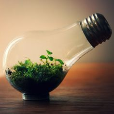 Re-use an old lightbulb to create a tiny terrarium! Watch this DIY vid to learn how.