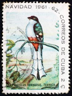 YAY Images - Postage stamp Cuba 1961 Cuban Trogon, Bird by