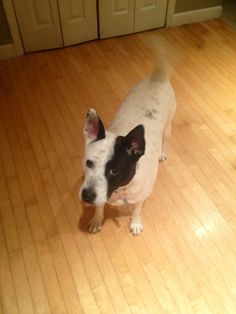 Introducing Lucky!Her foster mom found her as a stray and she was so emaciated. She brought her home to find she was also pregnant and when they were born, she was an awesome mom to her puppies. Lucky is estimated to be about 5 yrs old. So she has...