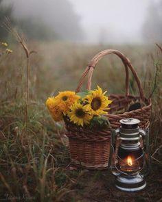Old Lanterns, Vintage Lanterns, Wallpaper Nature Flowers, Flower Wallpaper, Fantasy Photography, Nature Photography, Nature Pictures, Beautiful Pictures, Photo Collage Design