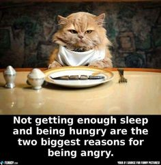 The biggest reasons for being angry (Funny Animal Pictures) - #angry #hungry #reason #sleep #tired