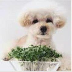 #English to #Japanese? Can you? He teased the dog before feeding it. Answer: http://ift.tt/1TUzaXy #eigo #nihongo #日本語 #英語