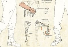 """""""Joey"""" leg mechanisms and details from Handspring Puppet Theatre's War Horse, as illustrated by Alberto Cuadra"""