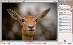 Camera Raw interface. Accessed through Adobe Bridge