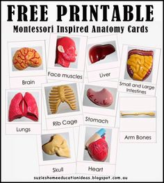 Free Printable Anatomy Cards