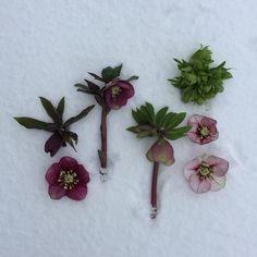 Natural Bouquet, Nature, Plants, Flora, Nature Illustration, Off Grid, Plant, Mother Nature