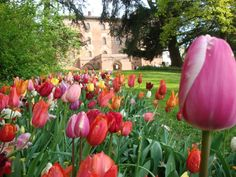 Our top picks for some lovely Italian gardens where to experience spring at its best.
