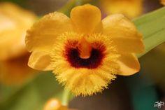 Orchidee_4 | Flickr: partage de photos!