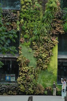 green wall. paris.