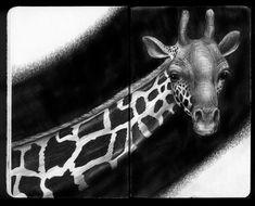 Tim Jeffs Art: Sketchbook Pink Drawing, Giraffe Drawing, Giraffe Art, Giraffes, Animal Sketches, Animal Drawings, Pencil Drawings, Photomontage, Caricatures