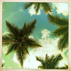 sous les cocotiers