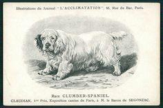 Clumber Spaniel Dog Breed original 1900s old L'Acclimatation postcard