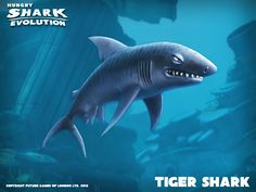 Tiger Shark - Hungry Shark Evolution www.tophackandroid.blogspot.com