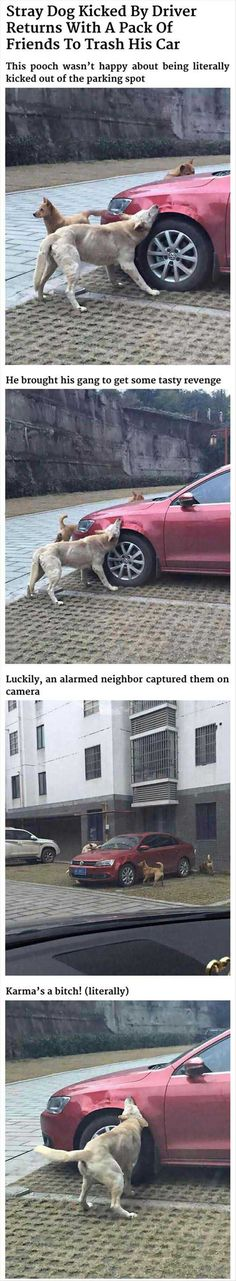 Dog Gets Revenge On Man Who Kicked Him - Don't ever think you can beat bad karma. It has a way of keeping score!