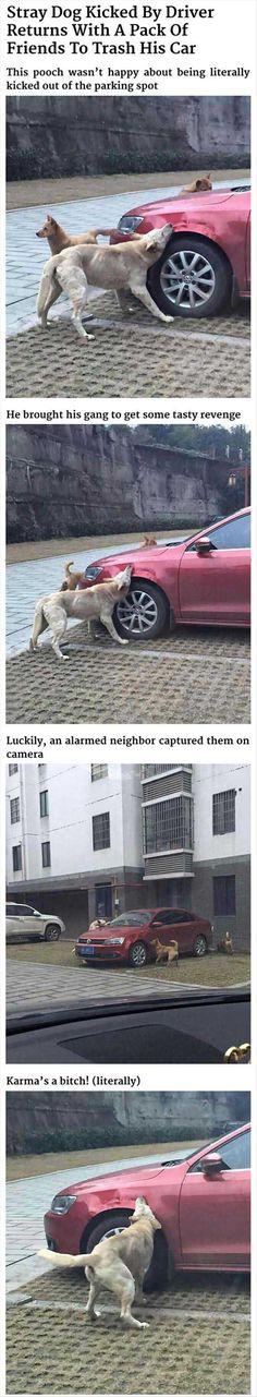 Dog Gets Revenge On Man Who Kicked Him - 4 Pics