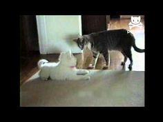 Cat Teaches Dog