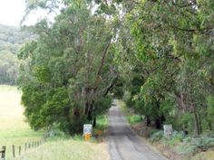 The beautiful Old Beech Forest Road Forest Road, Victoria Australia, Trail, Hiking, Old Things, Bicycle, Country Roads, Camping, Beautiful