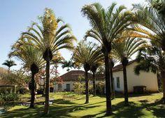 Casa de Fazenda com paisagismo inspirador de Burle Marx - Casa