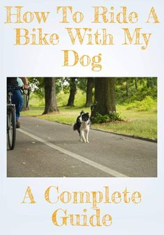 Bike riding with your dog! How to bike with a dog - Dutch Style Bike Dog Bike Seat, Dog Seat, Dog Bike Trailer, Taking Dog, Biking With Dog, Go Ride, Cool Bike Accessories, Service Dogs, Bicycles
