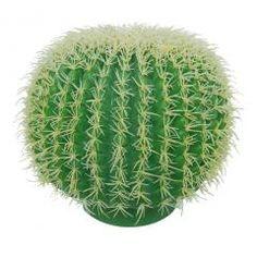 Cactus bol