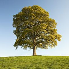 I would love to read a book under this tree.