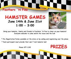 Guam's Quality Pet Store - 1st Annual Hamster Races June 14, 2014