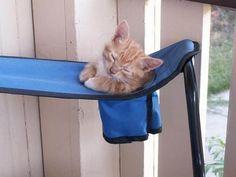 Simpaticas fotos de gatos durmiendo en extrañas posiciones.  [gallery link=