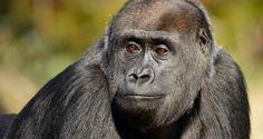 Zoologischer Garten / Zoo Aquarium | Berlin WelcomeCard – das Erlebnisticket für Berlin Touristen