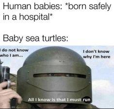 All Meme, Crazy Funny Memes, Funny Animal Memes, Really Funny Memes, Stupid Funny Memes, Funny Laugh, Wtf Funny, Funny Relatable Memes, Funny Texts