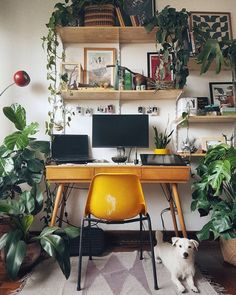 plant-filled work space!