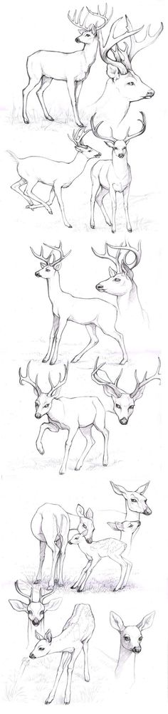 sketches_deers by Anisis on deviantART Different look for antlers.:
